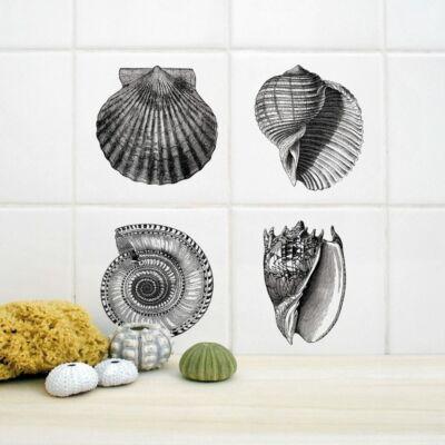 Kagylók - 4db - csempematrica - átlátszó