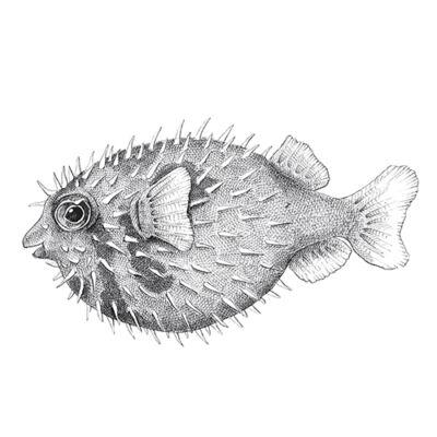 Sünhal - átlátszó csempematrica
