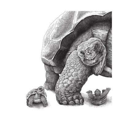 Teknősök - átlátszó csempematrica