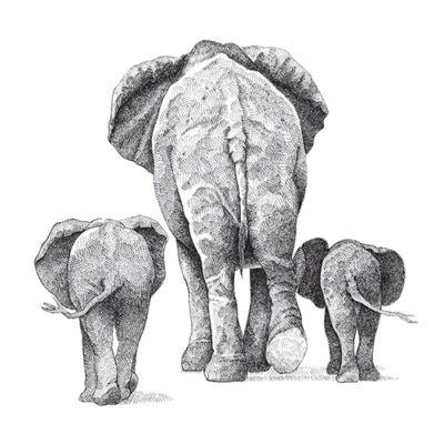 Elefántok - átlátszó csempematrica