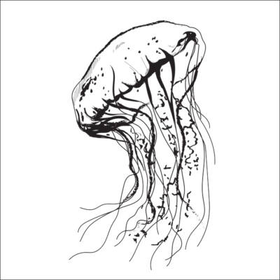 Medúza csempematrica